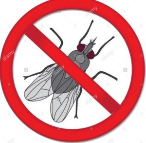 stop fly